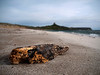 Drift wood, beach near Tharros, Sinis Peninsula, Sardinia<br /> Olympus E-420 & Zuiko 12-60mm/2.8-4.0