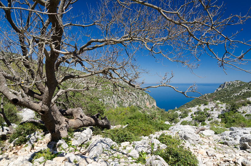 The wild path to Cala Goloritze', a beautiful bay located on the Ogliastra region, on the Gulf of Orosei, in the central-eastern coast of Sardinia.