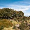 La Giara di Gesturi, altopiano situato nel Medio Campidano