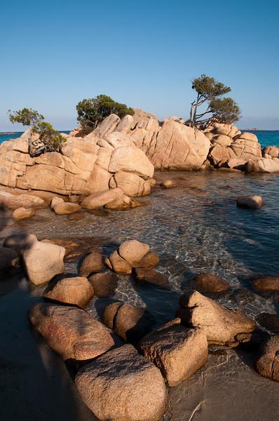Sardinia, Italy: Costa Smeralda, wild junipers at Capriccioli beach