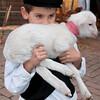 Fonni: bambino tiene in braccio un agnellino durante le cortes apertas - SOLO USO EDITORIALE / EDITORIAL USE ONLY