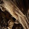 Fonni, cortes apertas: il grano con cui viene prodotto il pane carasau, uno dei simboli della cucina tradizionale sarda