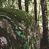 Aggius: bosco di querce all'uscita del paese gallurese