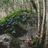 Aggius, bosco nei pressi del laghetto di Santa Degna