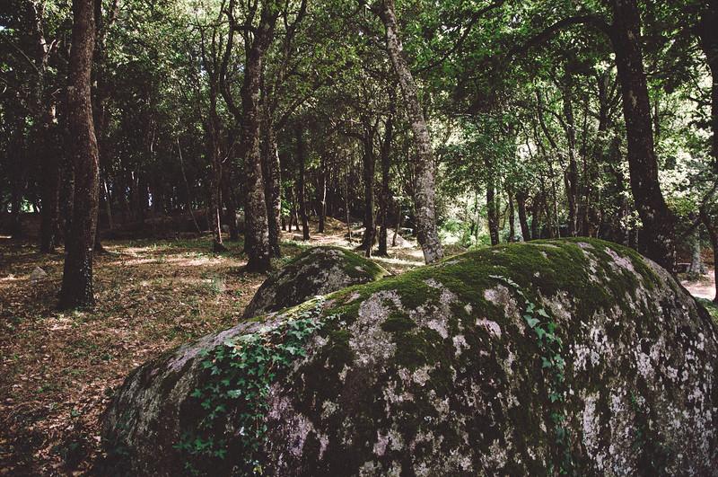 Aggius, bosco nei pressi del paese.