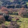 Sedilo, il territorio circostante al villaggio nuragico Iloi.