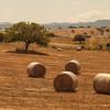 Cultivated fields near Ozieri. campi coltivati nei pressi di Ozieri.