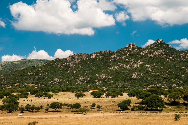 Campagna estiva nei pressi di Ozieri, nord Sardegna.