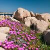 Palau, Porto Rafael: primavera tra rocce e natura selvatica nell'arcipelago della Maddalena.