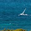 "Sardinia, Italy: Palau. Windsurf near ""La Sciumara"" beach."