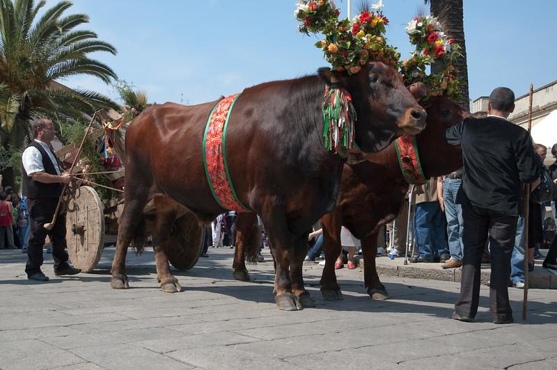 Sardinia, Italy: Sassari, Cavalcata Sarda Festival. Cavalcata Sarda: sfilata dei costumi tradizionali della Sardegna
