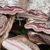 Sardinia, Italy: selection of cold cuts homemade - selezione di salumi artigianali