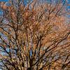 I colori dell'autunno in Barbagia