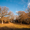 I colori dell'autunno in Barbagia: boschi nei pressi di Gavoi