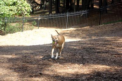 Sasha & Zoe Go to Lenox Park (10-2014)