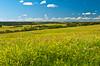 A prairie scene along the South Saskatchewan River valley near the Batoche, historic park, Saskatchewan, Canada.
