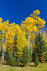 Fall foliage at the Elk Ridge Resort near Waskesiu Lake, Saskatchewan, Canada.