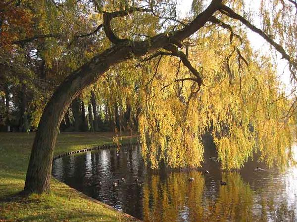 Park Rusthoff, foto 2003<br /> <br /> ref.nr: S1221
