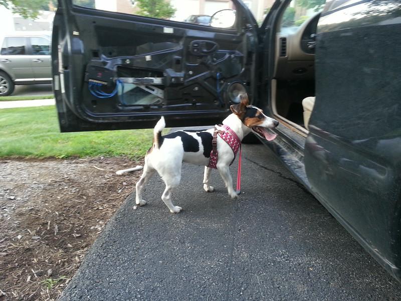 Lulu, the installation supervisor