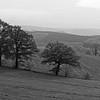 Along the Bigge-Lister Trail (b/w)