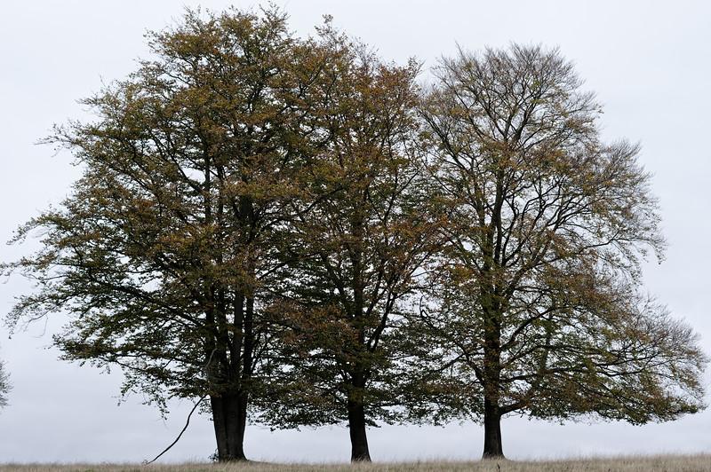 Three of a kind, Stilleking Nature Reserve