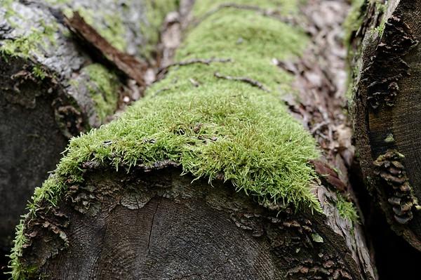 Moss-grown tree logs awaiting use