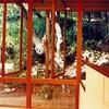 Sausalito cottage