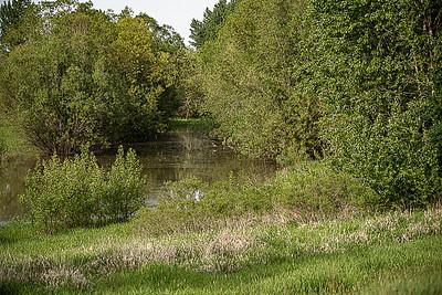 Sauvie Island Egrets-921