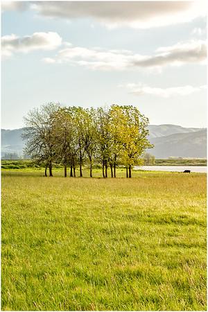 Grassy meadows - Sauvie Oak Island, Portland