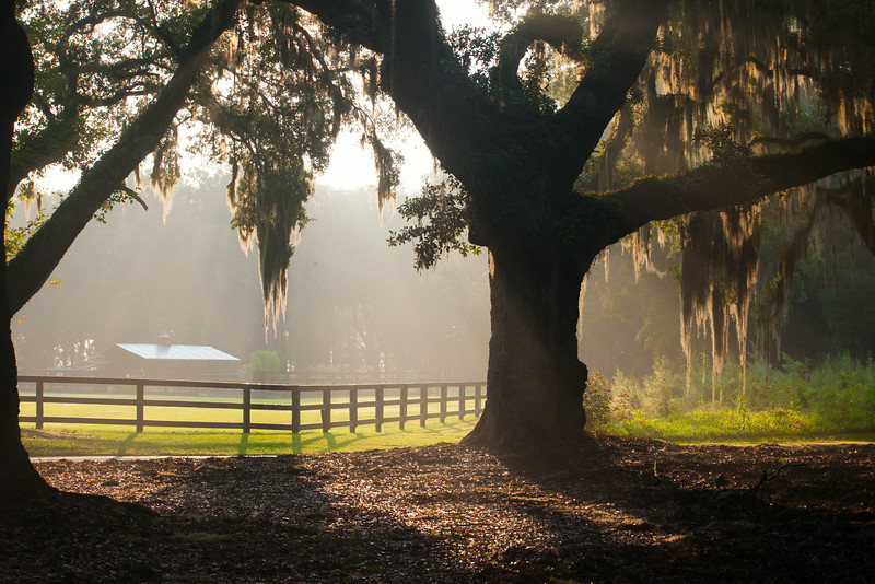 Early Morning Light in the South