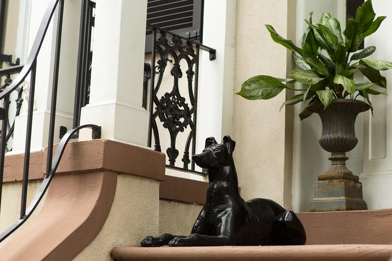 Dog on porch in Savannah Georgia