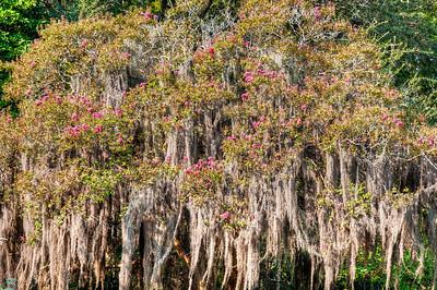 mossy-tree-flowers