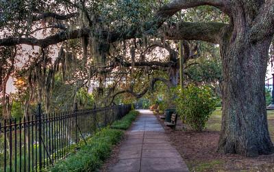 mossy-trees-walkway