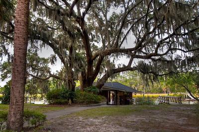 mossy-tree-shack