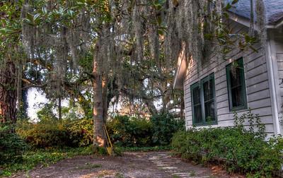mossy-tree-house