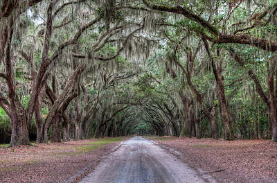 wormsloe-trees-road-3