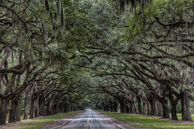 wormsloe-trees-road