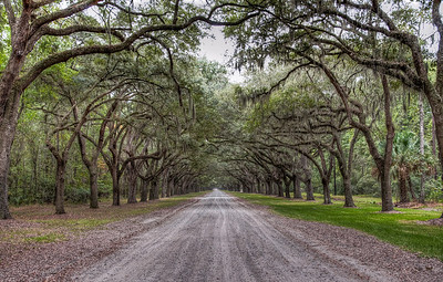 wormsloe-trees-road-2