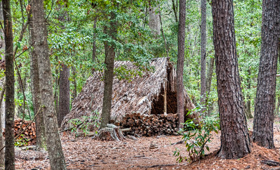 wormsloe-forest-shelter