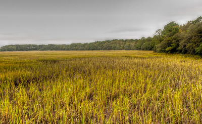 wormsloe-low-country-grasses