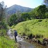 Francesca Demgen <br /> Save Mount Diablo's 2016 Bioblitz: The Final Morgan Fire Footprint Investigation. <br /> Perkins Canyon, Mount Diablo State Park. <br /> April 1, 2016