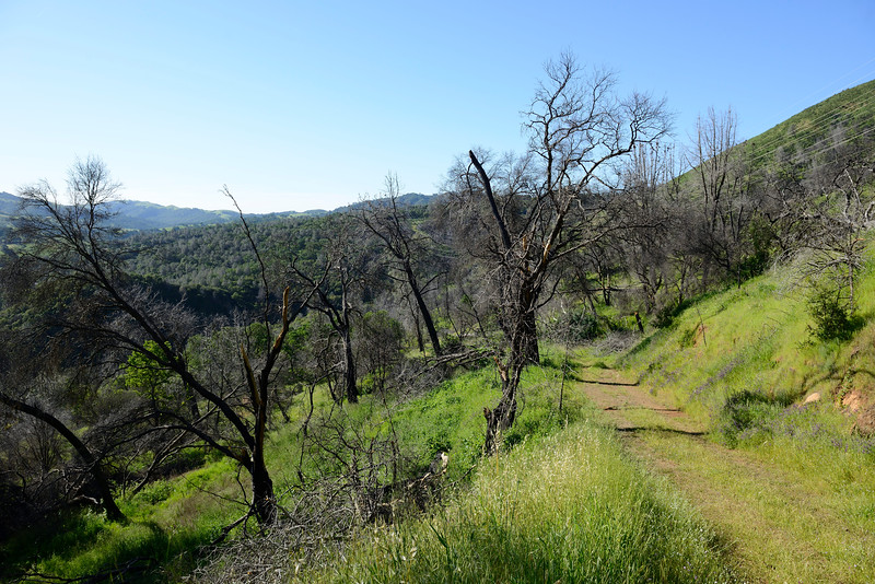 2013 Morgan Fire Burn Footprint <br /> Perkins Canyon, Mt. Diablo State Park <br /> Photo taken along Utility Rd on north <br /> side of Perkins Canyon.<br /> April 6, 2016