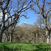 Anderson Ranch <br /> Save Mount Diablo <br /> March 12, 2018
