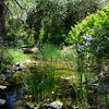 Marsh Creek - Big Bend <br /> Save Mount Diablo <br /> May 18, 2016