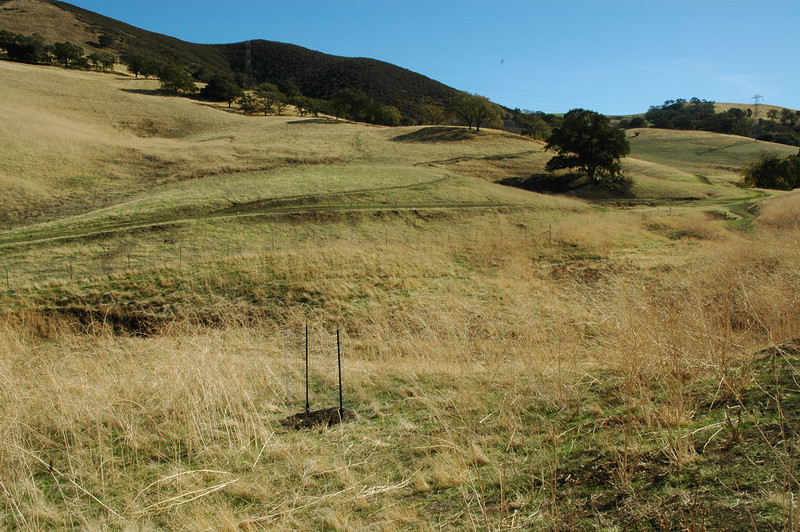 First site, one-third distance from monument oak, halfway between road and creek.