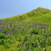 EBRPD - Doolan Canyon-Tassajara Ridge Reserve<br /> April 3, 2015<br /> Permission granted to Save Mount Diablo<br /> for any use.