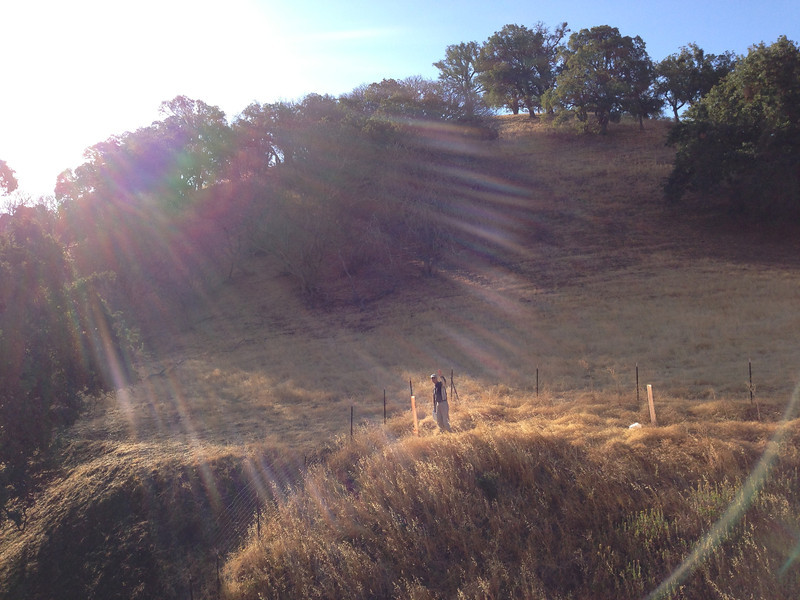 Rare solar flare appears illuminates Ken as he waters oak at east end of  site 3, fenced restoration area.