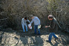 George, Pete, and Bob collect buckeyes at Krieger Peak site drainage.