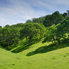 Irish Canyon <br /> East Bay Regional Park District  <br /> March 8, 2015
