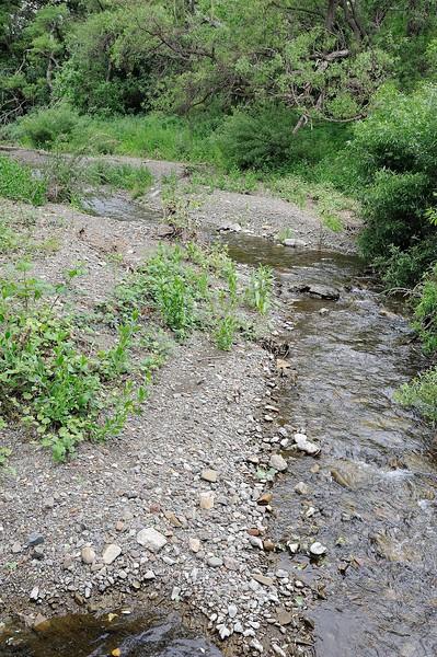 Marsh Creek Field Data Collection